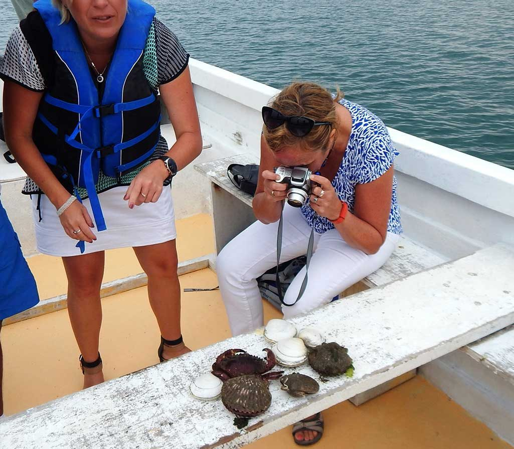 conchas-de-abanico-paracas
